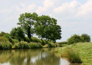 bomen langs water