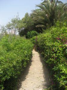 tuin pad met heesters (struiken)