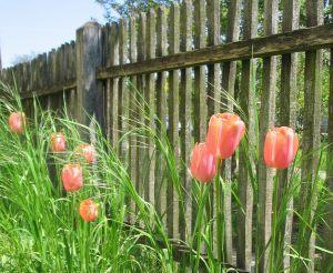 tuin afsluiting
