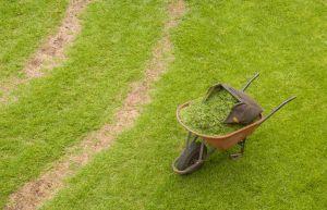 tuin gazon onderhouden